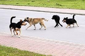 Apel w sprawie wałęsających się psów