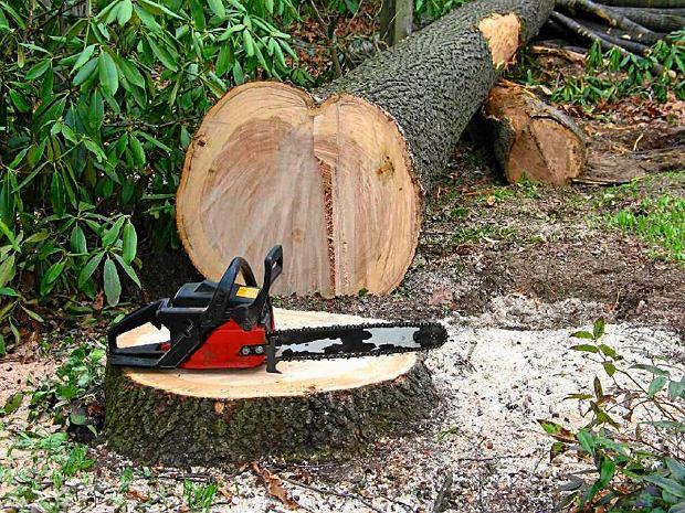 Nowe przepisy dotyczące usuwania drzew i krzewów