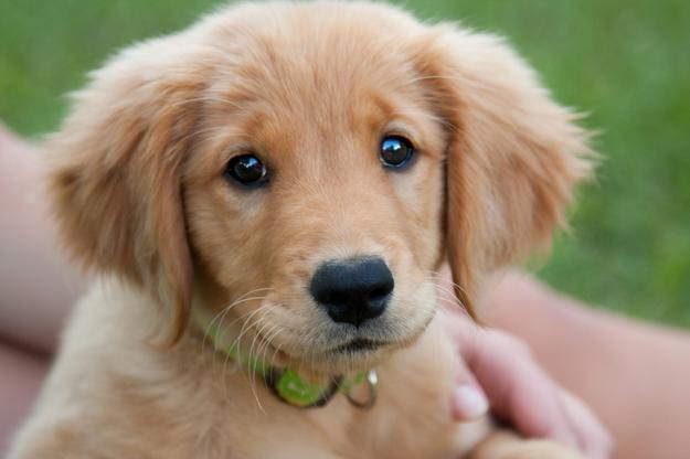 Możliwość adopcji psa