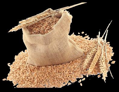 Dopłaty z tytułu zużytego do siewu lub sadzenia materiału siewnego kategorii elitarny lub kwalifikowany w ramach pomocy de minimis w rolnictwie