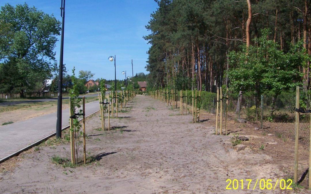 Nasadzenie drzew w miejscowości Wieleń