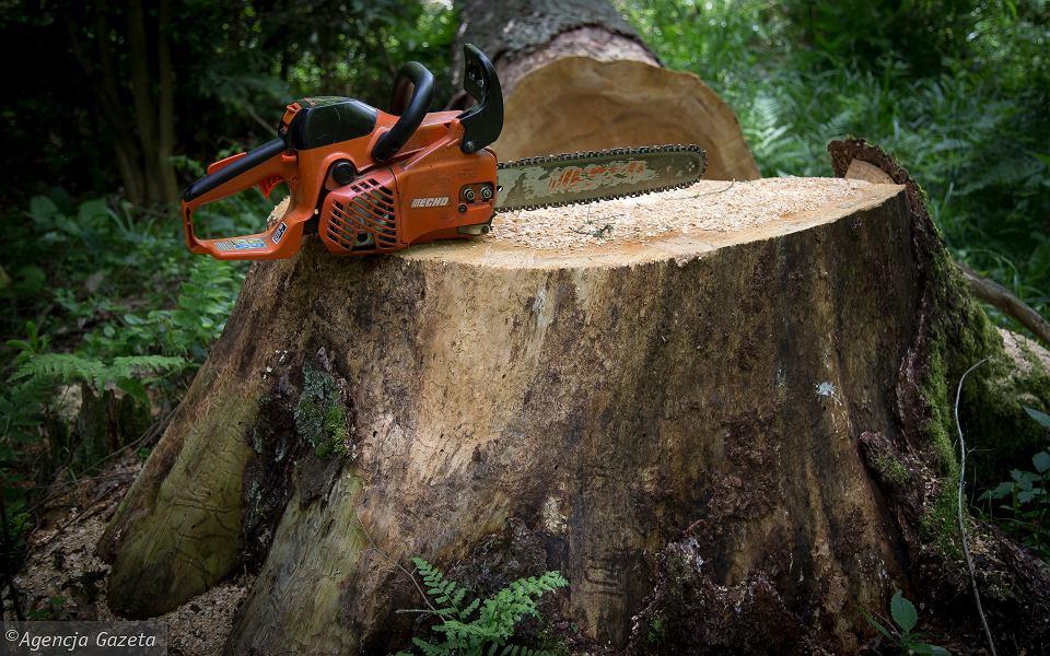 Zmiana przepisów dotyczących wycinki drzew – od 17 czerwca 2017r.