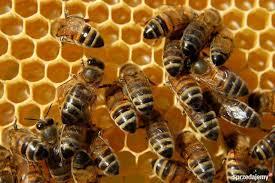 Zostań przyjacielem pszczół