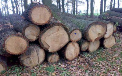 Gmina sprzedaje drewno wielkowymiarowe tartaczne i opałowe