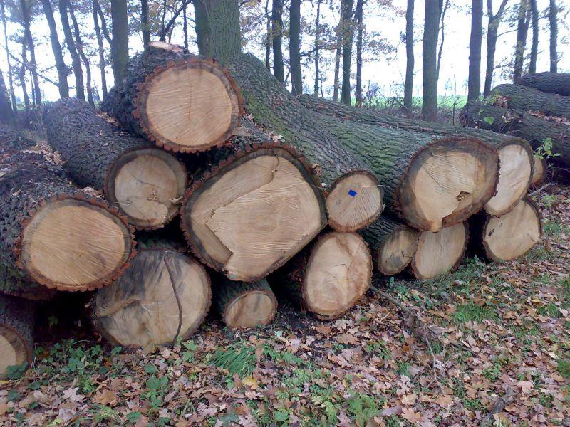 Zaproszenie do udziału w licytacji ustnej na zakup drewna wielkowymiarowego tartacznego i opałowego – po obniżonych cenach!!!