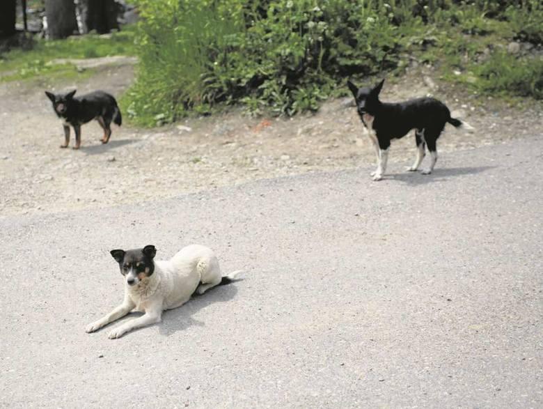 Apel w sprawie wałęsających się psów !!!